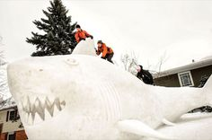 Funny pictures about Giant snow shark. Oh, and cool pics about Giant snow shark. Also, Giant snow shark. Picture Fails, Picture Day, Funny Images, Funny Pictures, Species Of Sharks, Snow Sculptures, Snow Art, New Brighton, Dump A Day