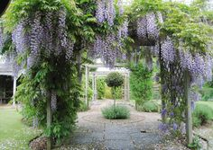 secret gardens - Norton Safe Search