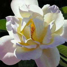 Pale Peace Rose by Brian Davis