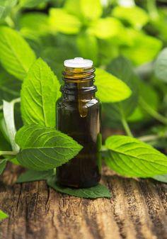 Organic Peppermint Essential Oil                                                                                                                                                                                 More