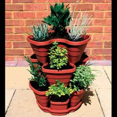 Great way to plant herbs in a small space