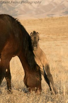 Filly - Great Basin Desert, Utah.