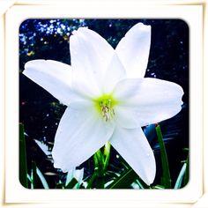 Un saludo de buenos días que me regaló una flor...