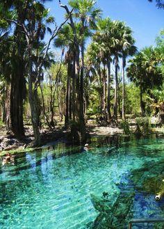 Bitter Springs,Mataranka, Australia.