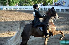 2012 Saddlebred Show Shelbyville, KY