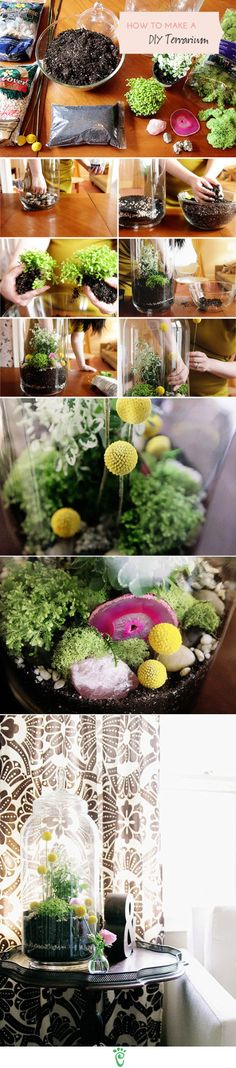 in love with the yellow flowers in this terrarium