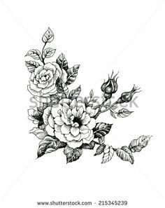 Image Result For Camellia Tattoo Designs Watercolor Flower Illustration Watercolor Rose Flower Clipart