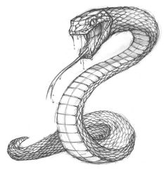 stylised snake pencil sketch