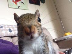 Squirrel's selfie