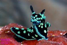 теги: природа, океан, море, глубина, морская улитка tags: nature, ocean, sea, depth, sea slug