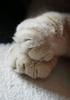 how sweet... kitty cat paws -- LOVE