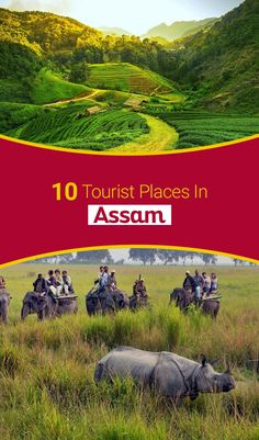 These 32 tourist places in Assam are the best locales to see on your next trip to the northeast in See why you must visit them with your loved ones! Brahmaputra River, Kayak Paddle, North India, Canoe Trip, Jungles, Canoes, Tourist Places, Kayaking, Fields