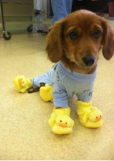 perros con pijamas | ActitudFEM