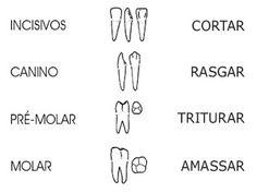 Redundant Becoming A Dental Hygienist Dental Hygienist, Dental Assistant, Human Mouth, Cute Tooth, Dental Anatomy, Teeth Implants, Oral Hygiene, Oral Health, Cavities