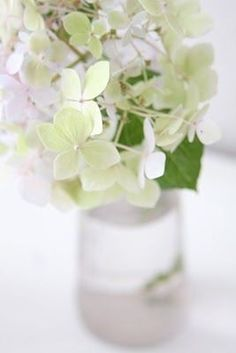 Living Room Inspiration, Garden Inspiration, Love Flowers, Beautiful Flowers, Floral Flowers, Green Hydrangea, Hydrangeas, The Colour Of Spring, Peaceful Home