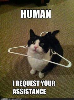 Human, I req your assistance lol