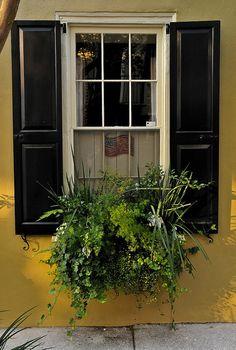 #charleston window box