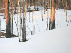Winter Sunset by Peter Rotter Abstract Landscape, Landscape Paintings, Oil Paintings, Winter Sunset, Winter Light, Art Gallery, Forest Light, Painting Snow, Winter Trees