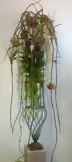 Tillandsia decorations - Corsa Tillandsia Webshop