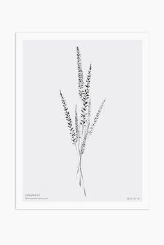 Botanical Wildflower Print, Minimalist Botanical Print, Botanical Poster, Boho Decor, Single or Set of 3 - Modern Room Decor, Modern Wall, Botanical Decor, Botanical Prints, Boho Decor, Art Decor, Pennisetum Setaceum, Wildflower Drawing, Kitchen Prints