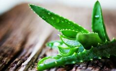 Aloe vera uses. How to use aloe vera in cosmetics and soap. What is aloe vera used for? What Is Aloe Vera, Aloe Vera Uses, Sunburn Remedies, Hair Remedies, Natural Remedies, Dark Spots On Face, Healthy Hair Growth, Tips Belleza, Tea Tree Oil