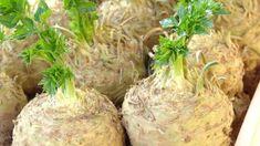 Chcete-li mít kvalitní a zdravý celer, je nejvyšší čas zasít semínka, protože celer má dlouhou vegetační dobu. Vegetable Garden, Baked Potato, Cabbage, Gardening, Baking, Vegetables, Ethnic Recipes, Diy, Lawn And Garden