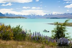 Make your trip to New Zealand budget-friendly by checking out our essential money-saving tips!