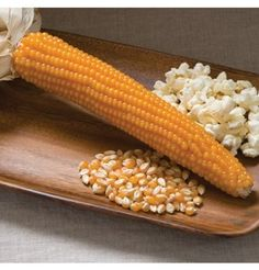 Browse our selection of brightly-colored dry field corn. Heirloom and organic seed options. Our dry corn seeds are all non-GMO and guaranteed. Popcorn Seeds, Garden Netting, Corn Plant, Seed Packaging, Organic Seeds, Garden Seeds, Organic Vegetables, Lawn And Garden, Vegetable Garden