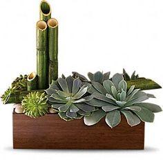 So Zen! @Teleflora  http://www.teleflora.com/flowers/bouquet/telefloras-peaceful-zen-garden-372635p.asp
