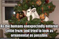 Photo Gallery: Holiday Cat Parade... Enjoy. #meow