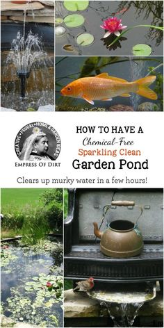 This simple trick is a chemical-free way to clear up murky water in small garden ponds within hours and keep it that way. This simple trick is a chemical-free way to clear up murky water in small garden ponds within hours and keep it that way. Outdoor Water Features, Water Features In The Garden, Backyard Water Feature, Ponds Backyard, Koi Ponds, Backyard Waterfalls, Backyard Ideas, Outdoor Fish Ponds, Rustic Backyard