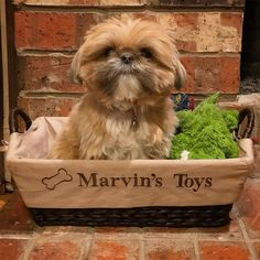 Am I a stuffed animal yet?? #blendingin #camoflauge #dogorstuffedanimal #toybox #cutenessoverload #fluffydog #dogtoy #cutestface #shihtzugram #shihtzu #shihtzuofig #shihtzuoftheday #ilovemyshihtzu #shihtzucorner #shihtzunation #shihtzulove #dailydoggo #smalldogsofinstagram #ilovemydog #crazydogmom #furchild #dogstagram #dogoftheday #dailycute #dogsofokc #marv #MarvMan toy storage toy display action figure display