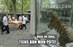 #tigrou