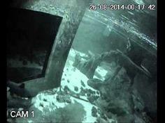 Nace una cría de tiburón en el acuario de la UMU en el Cuartel de Artillería