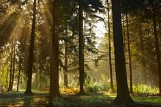 New Forest...golden afternoon sun!