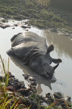 Kaziranga National Park Assam  http://wanderingpassport.com/?p=161