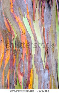 colorful abstract pattern of rainbow eucalyptus tree bark Rainbow Eucalyptus Tree, Photo Tree, Tree Bark, Flowering Trees, Abstract Pattern, Textures Patterns, Textured Background, Artwork, Color Combinations