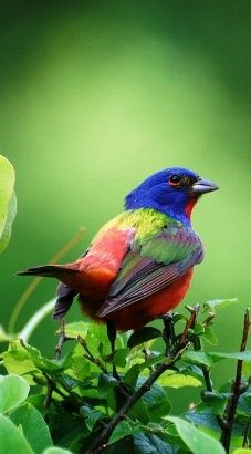 Painted Bunting. We get several of these guys every yr in our back yard.  Almost like God had a bunch of colors left over and just said.....ahhhhhhh here....and threw them all at once.