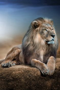 Majestic Strength