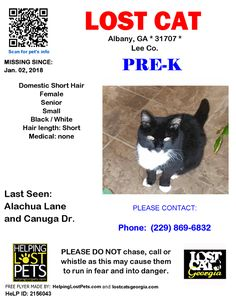#LOSTCAT #Pre-K #Albany (Alachua Lane & Canuga Dr.)  #GA 31707 #Lee Co.  #Cat 01-02-2018! Female #Domestic Short Hair Black / White/white hair under nose looks like small bowtie  CONTACT dorothy.griffin@gmail.com  Phone: (229) 869-6832  More Info Photos and to Contact: http://ift.tt/2Dyfzvi  To see this pets location on the HelpingLostPets Map: http://ift.tt/2mZuYd1  Let's get Pre-K home! #lostcatsgeorgia  #HelpingLostPets