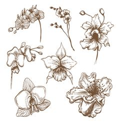 Hand drawn orchid flower set vector 1446033 - by Roman84 on VectorStock®