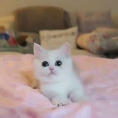 Outstanding Cats and kittens info are available on our web pages. Cute Little Kittens, Cute Baby Cats, Cute Little Animals, Cute Funny Animals, Kittens Cutest, Cute Dogs, Ragdoll Kittens, Tabby Cats, Funny Kittens