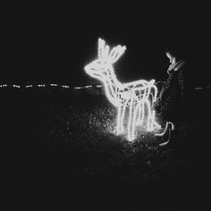 The world is full of magic things, patiently waiting for our senses to grow sharper. #littlethings #magic #reindeer