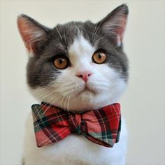 Community Post: Meet The Most Sophisticated Cat On The Internet Right Meow