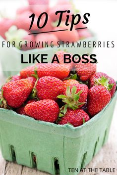 10 Tips for Growing Strawberries {Like A Boss} | Ten at the Table