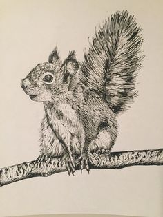 My illustration of a cheeky little squirrel drawn in pen and ink. My illustration of a cheeky little Squirrel Tattoo, Squirrel Art, Squirrel Illustration, Illustration Art, Ink Pen Drawings, Drawing Sketches, Animal Sketches, Animal Drawings, Zootopia