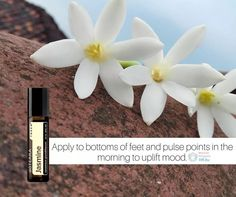 Jasmine Touch can be applied to pulse points for a calming yet euphoric aroma that uplifts mood and promotes a positive outlook. Renowned for its skin benefits Jasmine Touch can help reduce the appearance of skin imperfections and promotes a healthy-looking glowing complexion.  I am totally in love with these new oils. How many of you have tried this already? #essentialoils