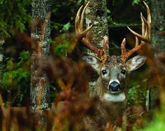 Deep-Woods Deer Hunting Tactics for Big Bucks | Outdoor Life