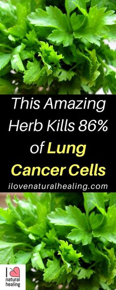 Herb for Lung Cancer - Significant attention has actually been dedicated to recognizing plant-derived nutritional agents which could be established as appealing chemo-preventives. Natural Cancer Cures, Natural Cures, Natural Healing, Natural Treatments, Herbs For Health, Health Tips, Lung Cancer, Cancer Cells, Breast Cancer