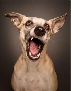Quante 'facce' questi musi, le mille espressioni dei cani di Elke Go to official site: wieselblitz.de/en/animal-welfare/